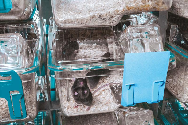 Tecniplast USA - Laboratory Animal Equipment